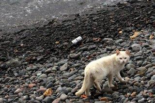 島暮らしの猫は忙しい…「用もないのに呼び止めるにゃ!」