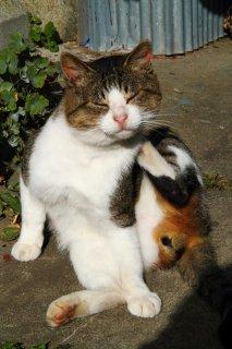 """激レアさん!縞三毛""""にゃんたま""""が説く猫島暮らしの秘訣とは"""