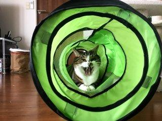 笑う猫 2020.12.21(月)