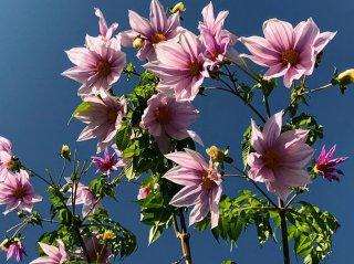 真冬の花 2020.12.26(土)