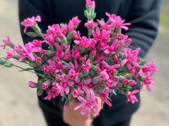 香川のひとも知らん香川県の花…だなんてオドロキ 写真 綾川花卉園