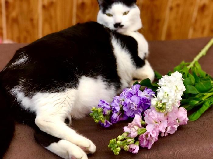 春になると寝床の横でいつもこの花の匂いを嗅いでるぜ byさぶ店長