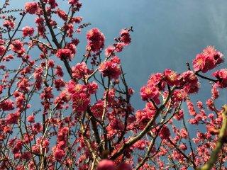 春の気配 2021.2.24(水)