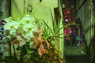 路地裏に咲く花 2021.2.15(月)