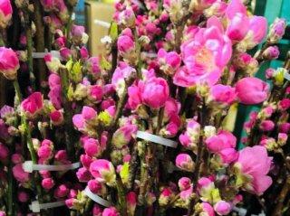 大人の女性にも大事な行事…上巳の節句に「桃の花」で厄払い