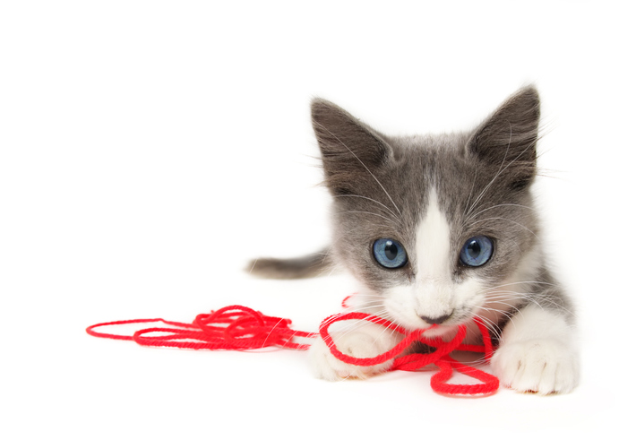 運命の赤い糸の先は猫でした(写真:iStock)