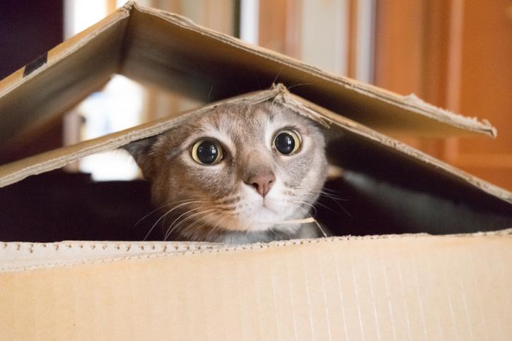 猫は「かわいい」が仕事(写真:iStock)