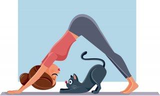 猫×ヨガの癒しパワー「ネコヨガ」で心身ともにリフレッシュ