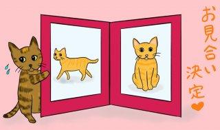 子猫8匹と合同お見合い開催!ボランティアからの意外な助言