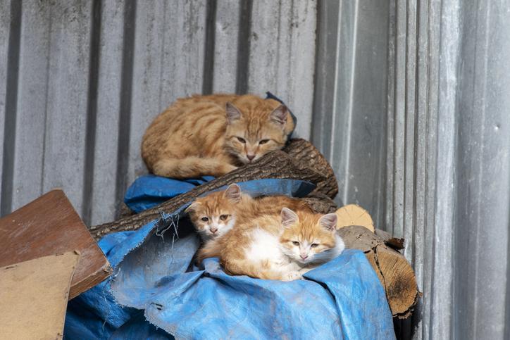 猫を捨てる人がいなくなりますように(写真:iStock)