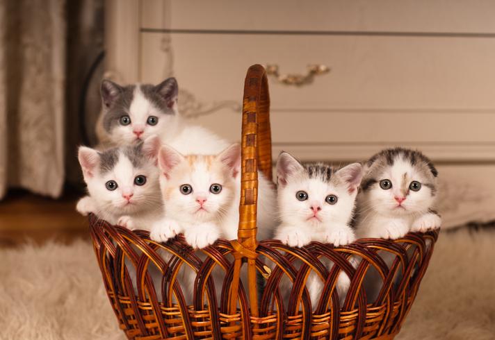 愛猫を守りたい…(写真:iStock)