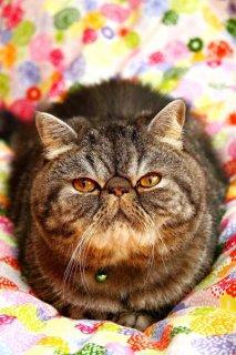 SNSで話題のスター猫が大集合! 個性豊かな「バズり猫」たち