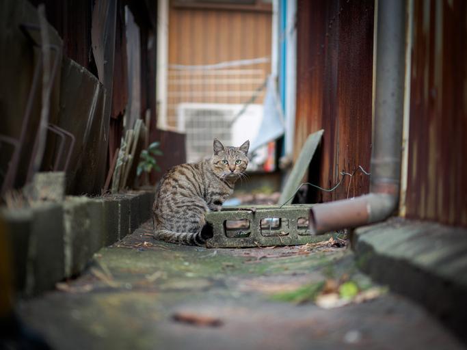 野良猫は厳しい環境で生きている(写真:iStock)