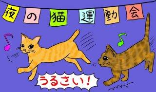 トホホ、猫って夜行性なんですね…子猫運動会実況中継!