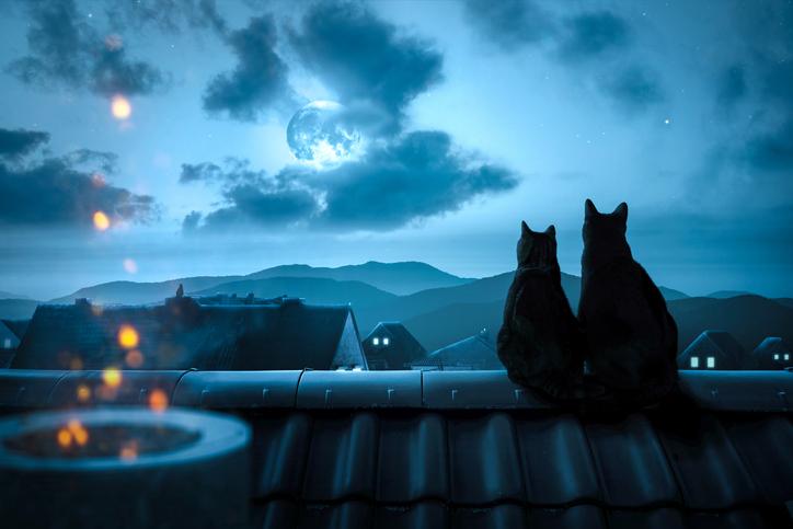 だって猫だもん(写真:iStock)