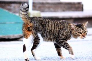 """ロックオン! 猫の狩りは""""にゃんたま""""撮影の方式とそっくり"""