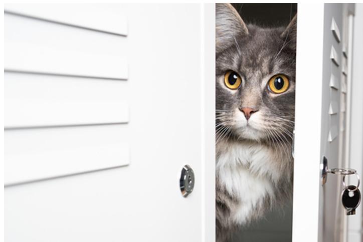 「クロゼット監禁事件」は猫飼いあるある(写真:iStock)