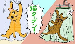 """保護猫2匹、真夏の夜の""""クローゼット閉じ込め""""事件に遭う"""