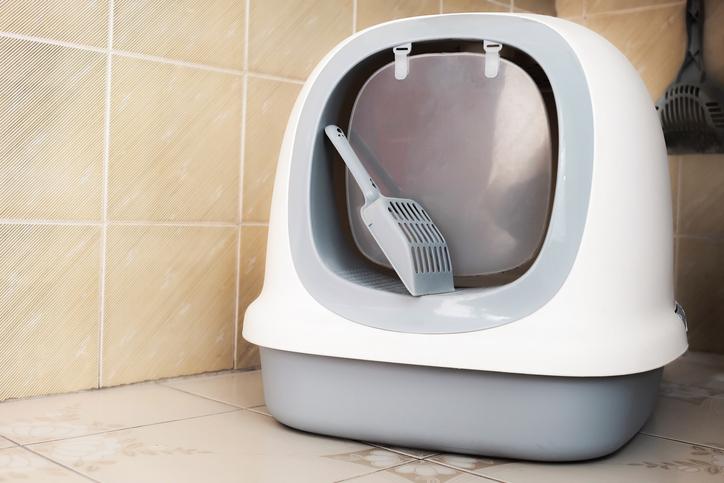 猫のトイレは頭数+1が推奨(写真:iStock)