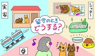 留守時の猫どうする問題!著者実践トラブル知らず3つの対応策