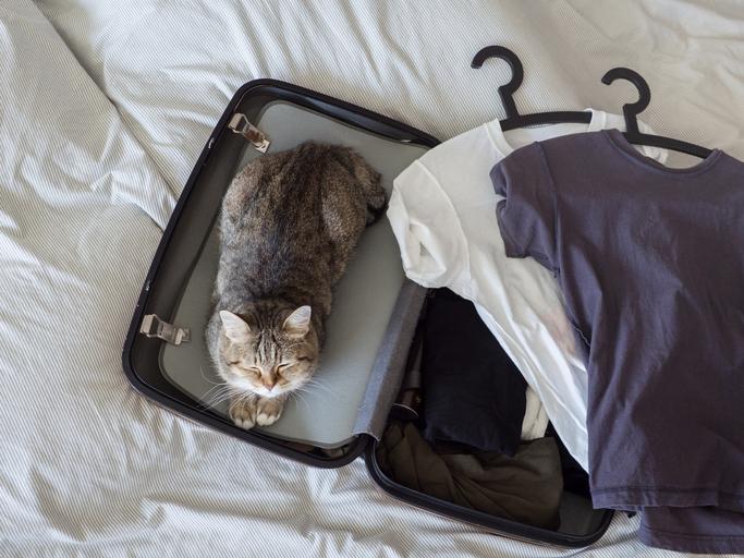 猫って荷造りしてると必ず邪魔してくるよね(写真:iStock)