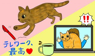 ひとり暮らしは孤独?猫がいれば自粛生活だってパラダイス!