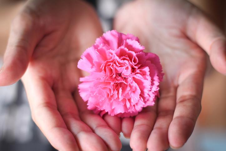 カーネーションの花言葉は「無垢で深い愛」(写真:iStock)