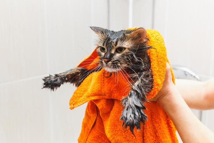猫は濡れることが大嫌いなんです(写真:iStock)