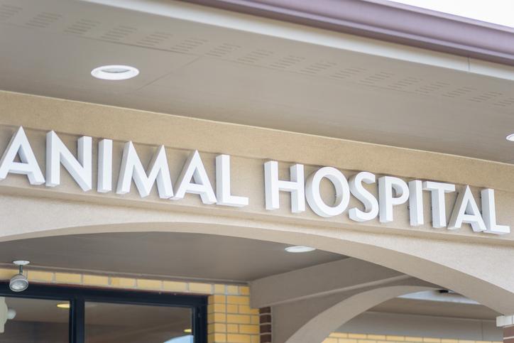 内視鏡の有無で動物病院を選んでも(写真:iStock)