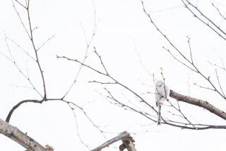 whiteのドコ? 2021.5.13(木)