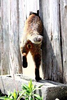 """塀に空いた穴に頭を突っ込んで…""""にゃんたま""""君の大胆ポーズ"""