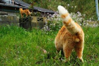 """猫草を夢中でムシャムシャ…""""にゃんたま""""の食欲は止まらない"""
