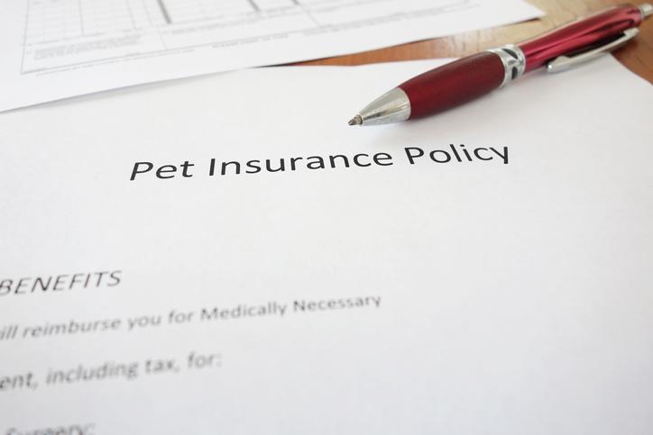 ペット保険と自腹の分岐点は(写真:iStock)