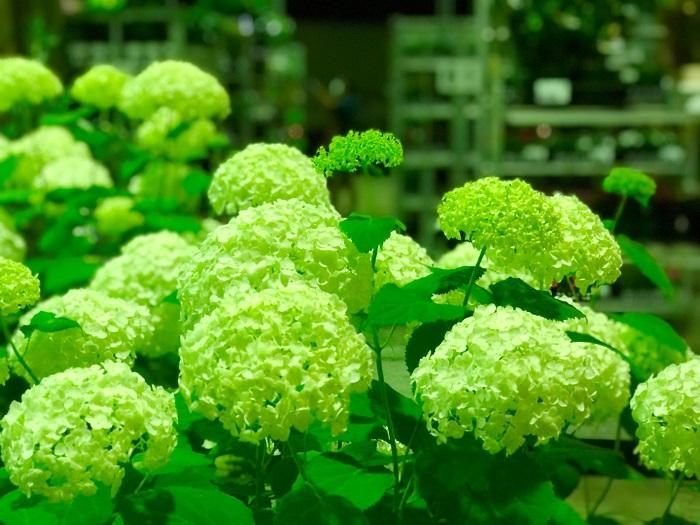 真夜中の花市場は植物たちの話し声が聞こえてきそう