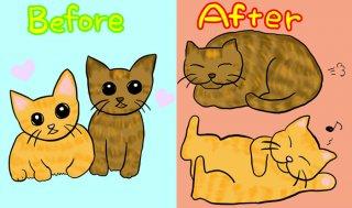 デブっちょ勝たん♡ だから猫のダイエットは人間より難しい!