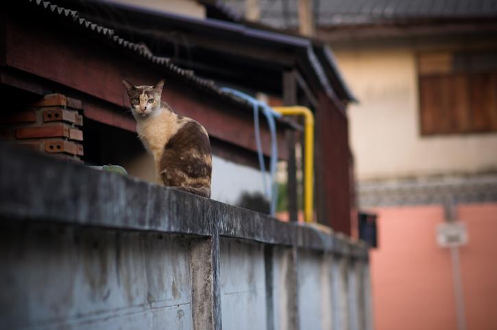 野良猫は丸1日食べられない時も(写真:iStock)