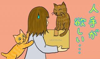 愛猫と婚活とパートナー…あなたは何を優先し大事にしますか