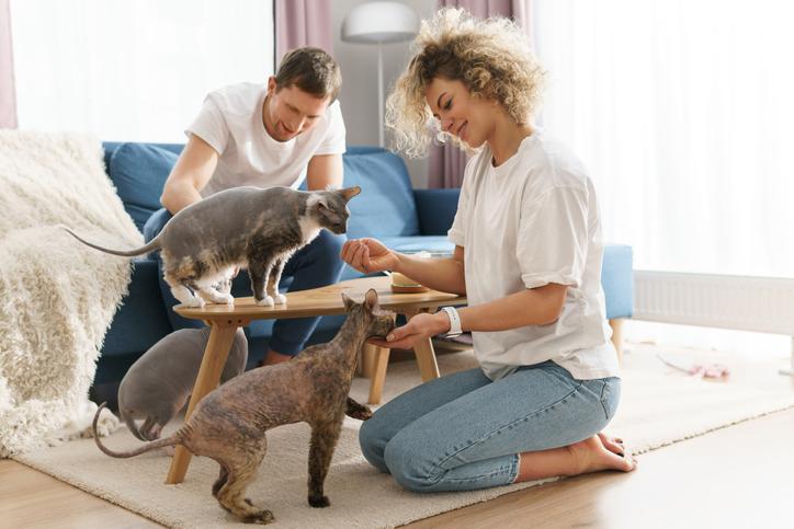 お相手の猫も愛せるかしら?(写真:iStock)