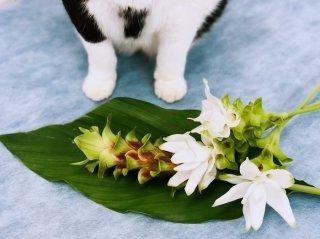 厳しい残暑に清涼を!ウコンの花「クルクマ」の美しい花姿